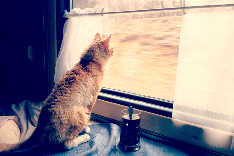Cat looking out window of Russian train