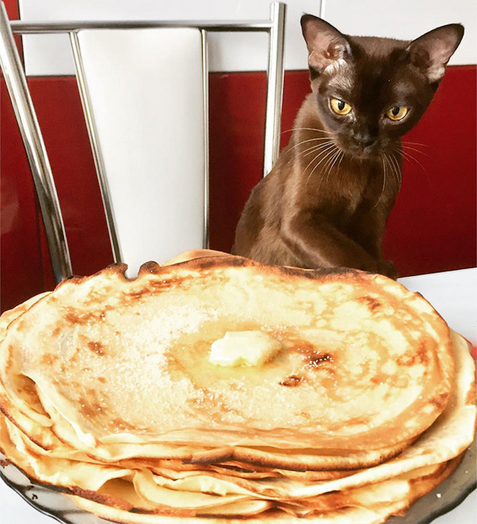 Cat with blini