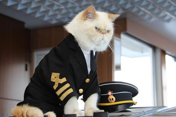 Olympians, Titans, and cats dressed up as sailors